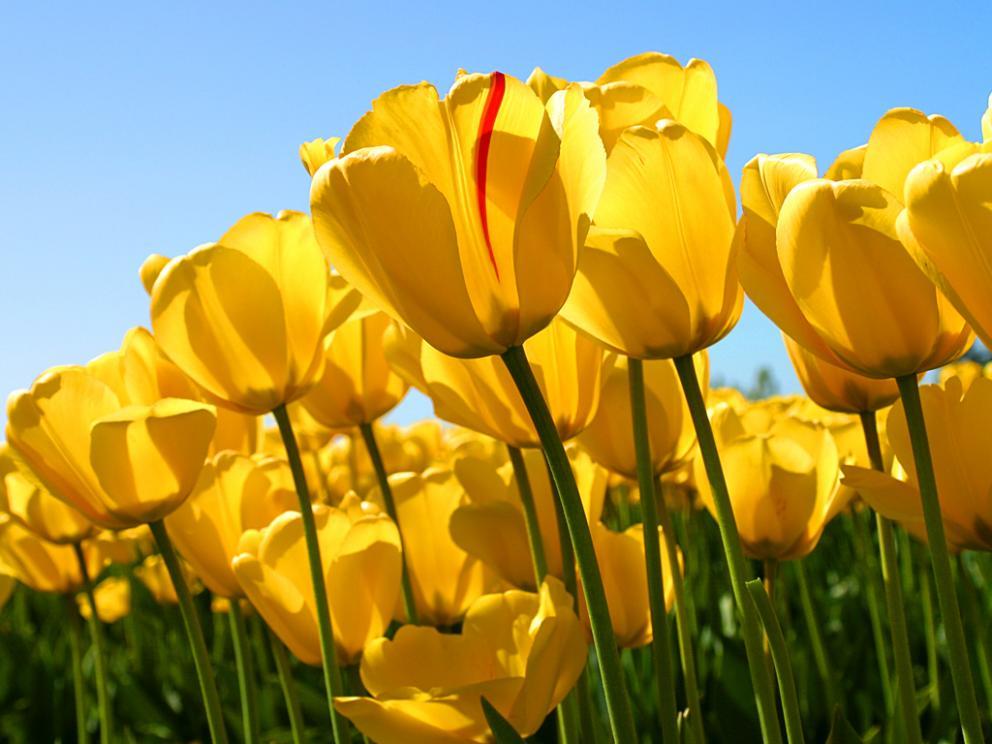 kukka blomma